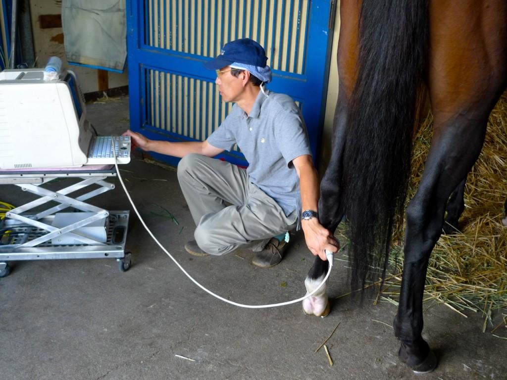 馬の超音波検査