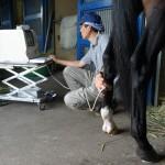 馬のエコー検査